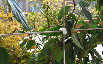 Trellis Cross Clamp Example - 90 Degree