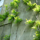 Green Wall Trellis Systems