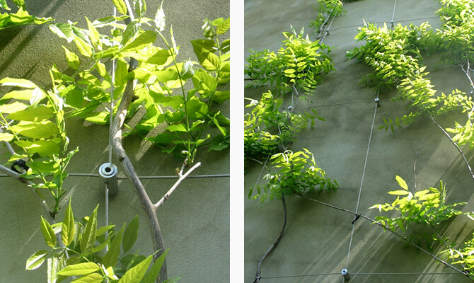 Examples Of Wire Trellis And Green Walls In Place S3i Group