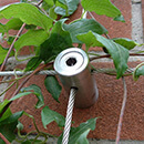 1m x 1m Wire Trellis Kit - Stainless Steel Wire Trellis - 50cm Spacing
