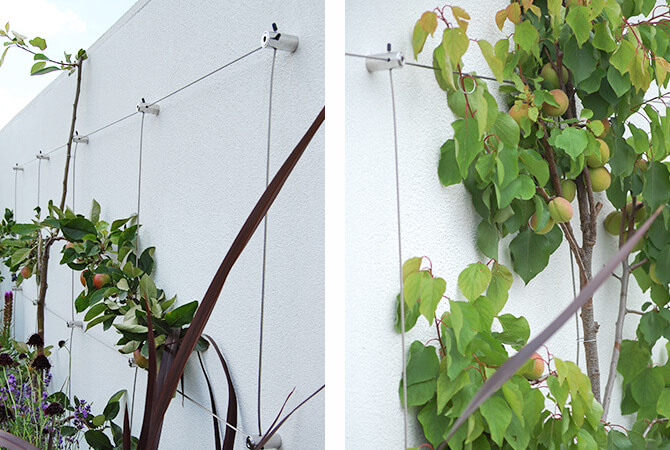 Wire Trellis layout