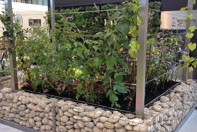 Wire Trellis System for Grand Design Live