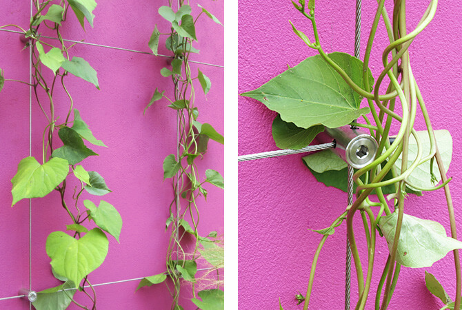 Green wall cable trellis hubs
