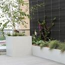 Manchester Rooftop Garden Green Wall