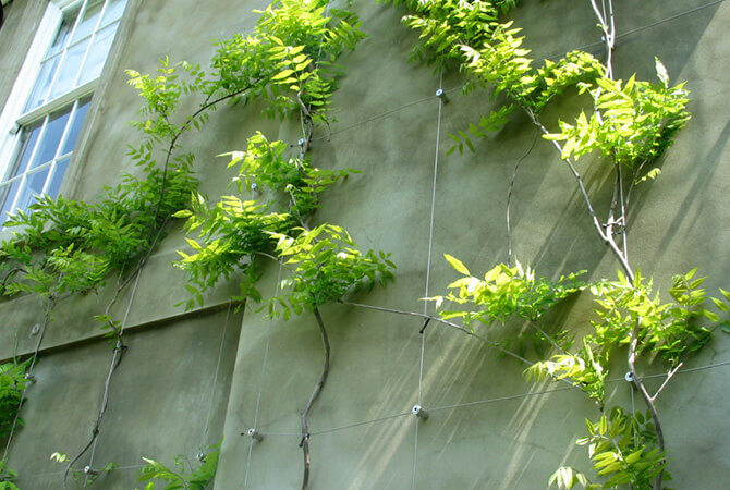 Large Green Wall Installation