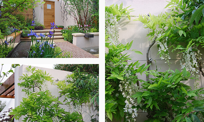 Beautifully Designed Garden with Green Wall Trellis