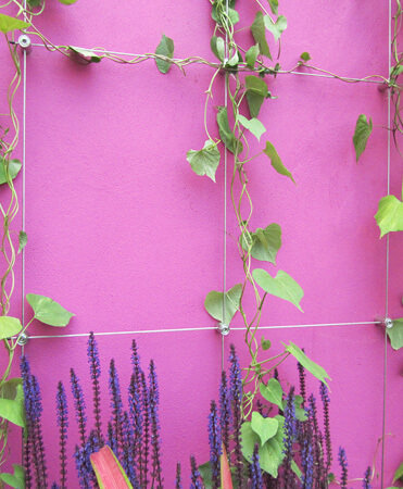 Stainless Steel Wire trellis