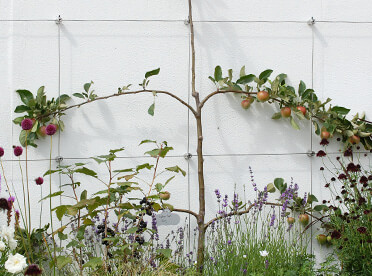 Green Wall Wire Trellis